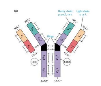 免疫球蛋白c偏高的原因是什么