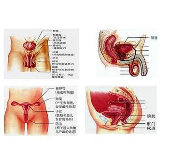 阴道内窥镜是什么
