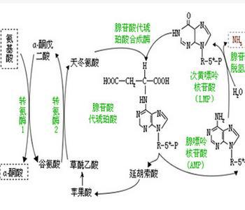 转移酶偏高怎么办