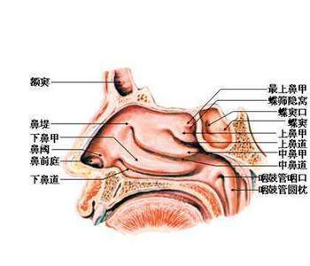 鼻息肉表现有哪些