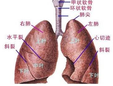先天性肺囊性病有哪些症状?