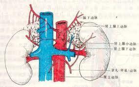肾上腺肿瘤的诊断