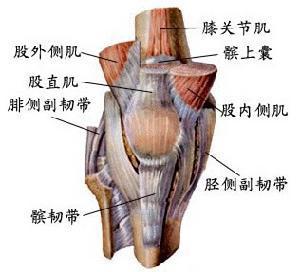 膝关节韧带损伤怎么治疗