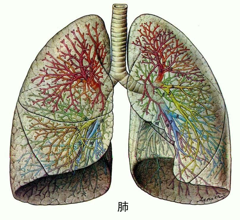 如何治疗消散延迟性肺炎