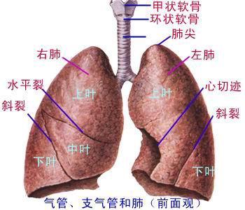 如何治疗先天性支气管囊肿