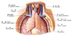 发生胸壁深部软组织感染该怎么办