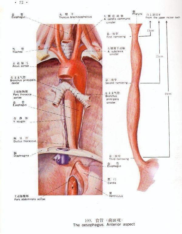 食管囊肿病人的术后护理该怎么做