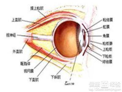 ,头痛的现象,耳朵下的淋巴结肿大发炎.眼睑皮肤上还出现了很多大