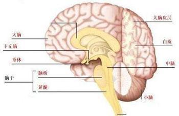 如何护理小儿脑性瘫痪