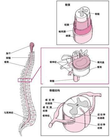 小孩造成小儿脊髓损伤该怎么办