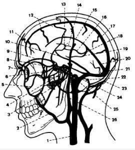 小儿巨脑畸形综合征该怎么办