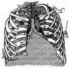 胸壁软组织损伤该如何治疗