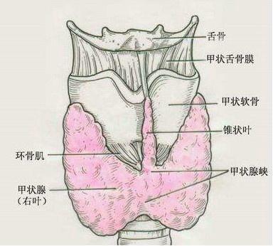 胸内甲状腺肿怎么办