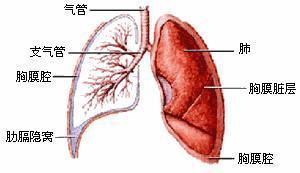 得了肺转移瘤怎么办