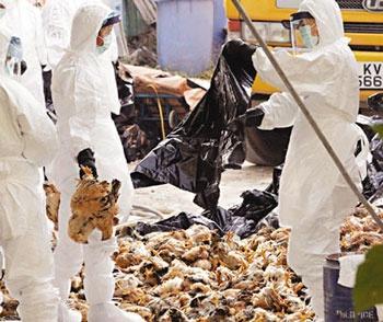 出现高致病性禽流感病毒感染怎么办