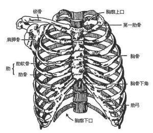 发生胸骨骨折该怎么办