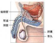 女性生殖气囊肿图片