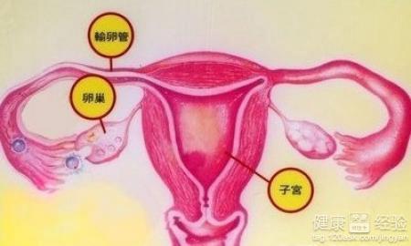 卵巢囊肿的危害都有哪些图片