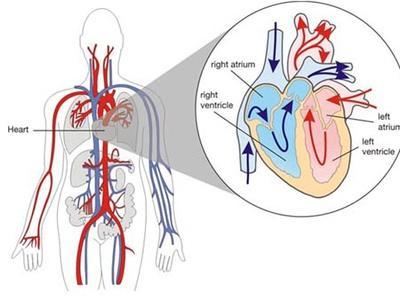 心脏病快速治愈法 - 低调、一指禅 - 默默无闻的教育教学博客家园