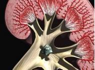肾结石卡在阴茎处吃什么能排出呢