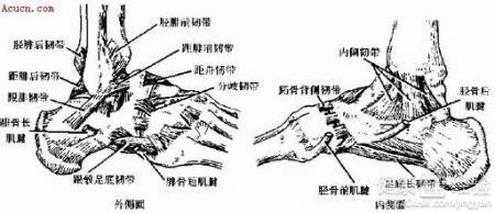 治疗 肌腱 断裂/步骤/方法: