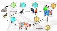禽流感判定与标准是什么