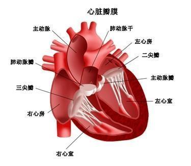 心脏黏液瘤症状是什么?