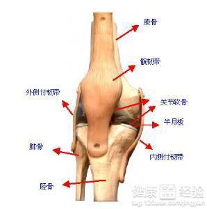 半月板损伤保守治疗 半月板损伤能自愈吗 半月板撕裂如何治疗