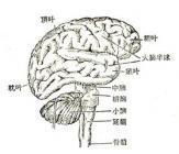 脑震荡有什么后遗症