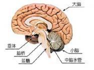 脑膜瘤能活多久