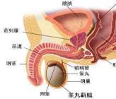 尿道炎吃什么消炎药呢