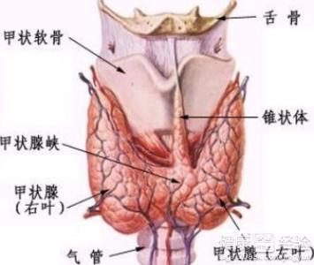 甲状腺癌能活多久