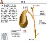 中医治疗胆囊息肉的效果怎么样呢