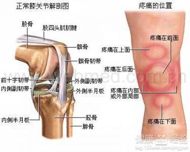 左腿的膝关节半月板损伤怎么治疗啊
