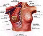 乳腺癌是什么感觉疼吗_健康经验_快速问医生