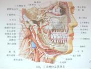 三叉神经痛是什么样的疾病呢