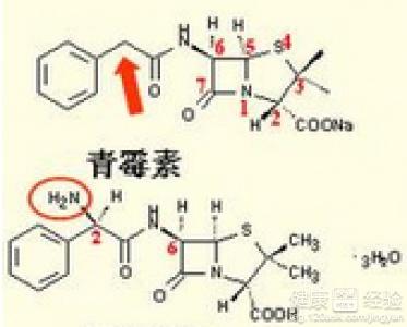 青霉素过敏的原理_图11-1 青霉素过敏反应的机理   三、皮内试验方法   (一)皮内试验液的配制   皮内试验液以每毫升含100-500u的青霉素g等渗盐水溶液为标准