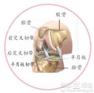 左膝关节内侧半月板损伤注意什么啊