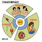 艾滋病的感染机率及病毒离开人体后存活期