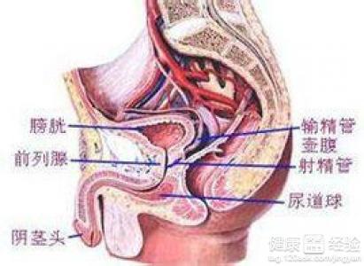 男性龟头炎初期症状