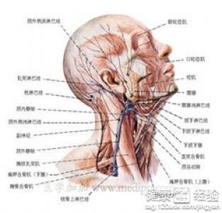 淋巴结核是什么病