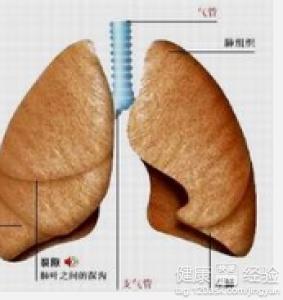 肺癌晚期吃什么好