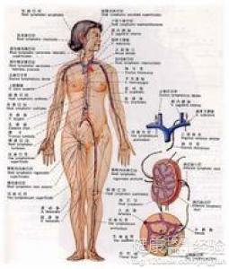 淋巴结核吃那些药有助于康复