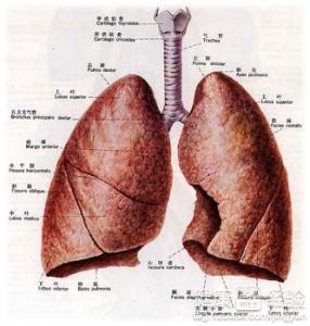 淋巴结核复发症状表现