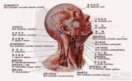 请问右侧颈部淋巴结肿块是什么原因呢