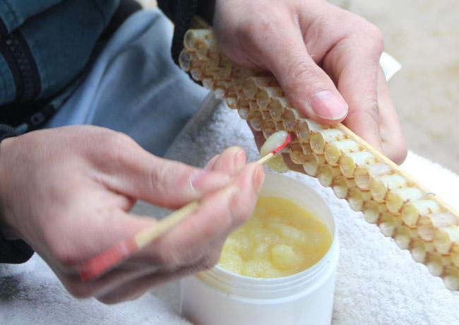 有乳腺纤维瘤的可以吃蜂皇浆吗