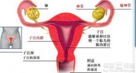 b超输卵管造影前检查
