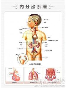 马尾神经损伤的症状与护理
