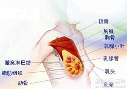 腋下淋巴结肿大原因-哺乳期怎么自查乳腺炎
