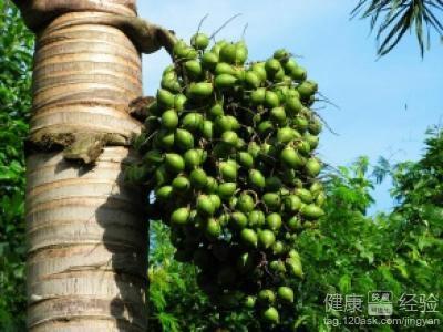 吃槟榔有什么好处图片